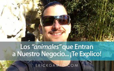 """Los """"Animales"""" que Entran a Nuestro Negocio… ¡Te Explico! =)"""